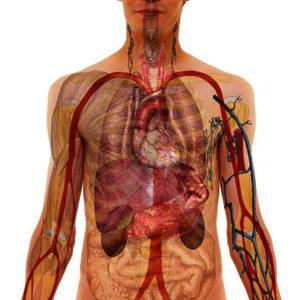BS&i Anatomy